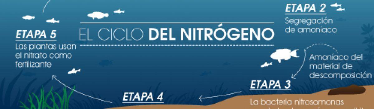 Ciclado del acuario. El ciclo del Nitrógeno